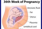 usia kehamilan 36 minggu