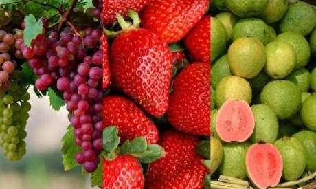 Jus Anggur Stroberi Jambu Untuk Menghilangkan Jerawat