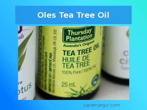 tree tea oil alami 100 persen asli ampuh atasi jerawat
