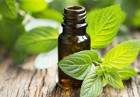 peppermint obat tradisional alami sakit tenggorokan yang bisa dibuat sendiri