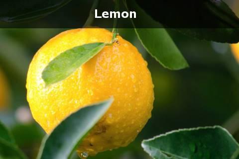 lemon untuk menghilangkan komedo putih dengan cepat