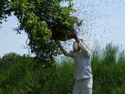 Manfaat madu untuk kesehatan dan kecantikan 02