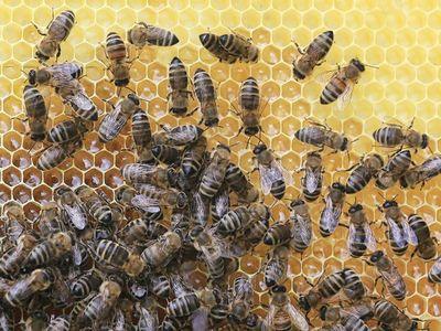 Manfaat madu untuk kesehatan dan kecantikan 09