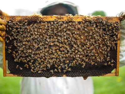 Manfaat madu untuk kesehatan dan kecantikan 10